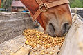 horse mouth.jpg