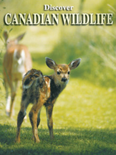 Discover Canadian Wildlife Playing Cards