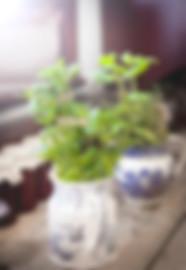aromatic-basil-close-up-977903.jpg