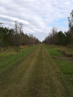 A Thousand Acres, a Gas Can, and a Weed Eater