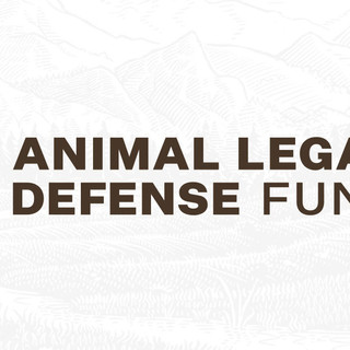 The Songs for Freedom CD is with songs about animal and wildlife welfare with all revenues going to the Animal Legal Defense Fund (ALDF)