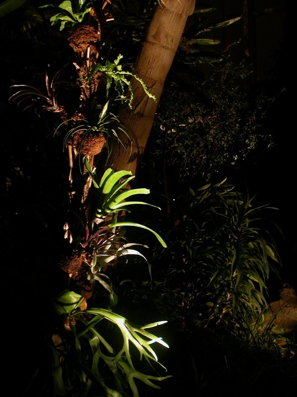 Lumière Martinique
