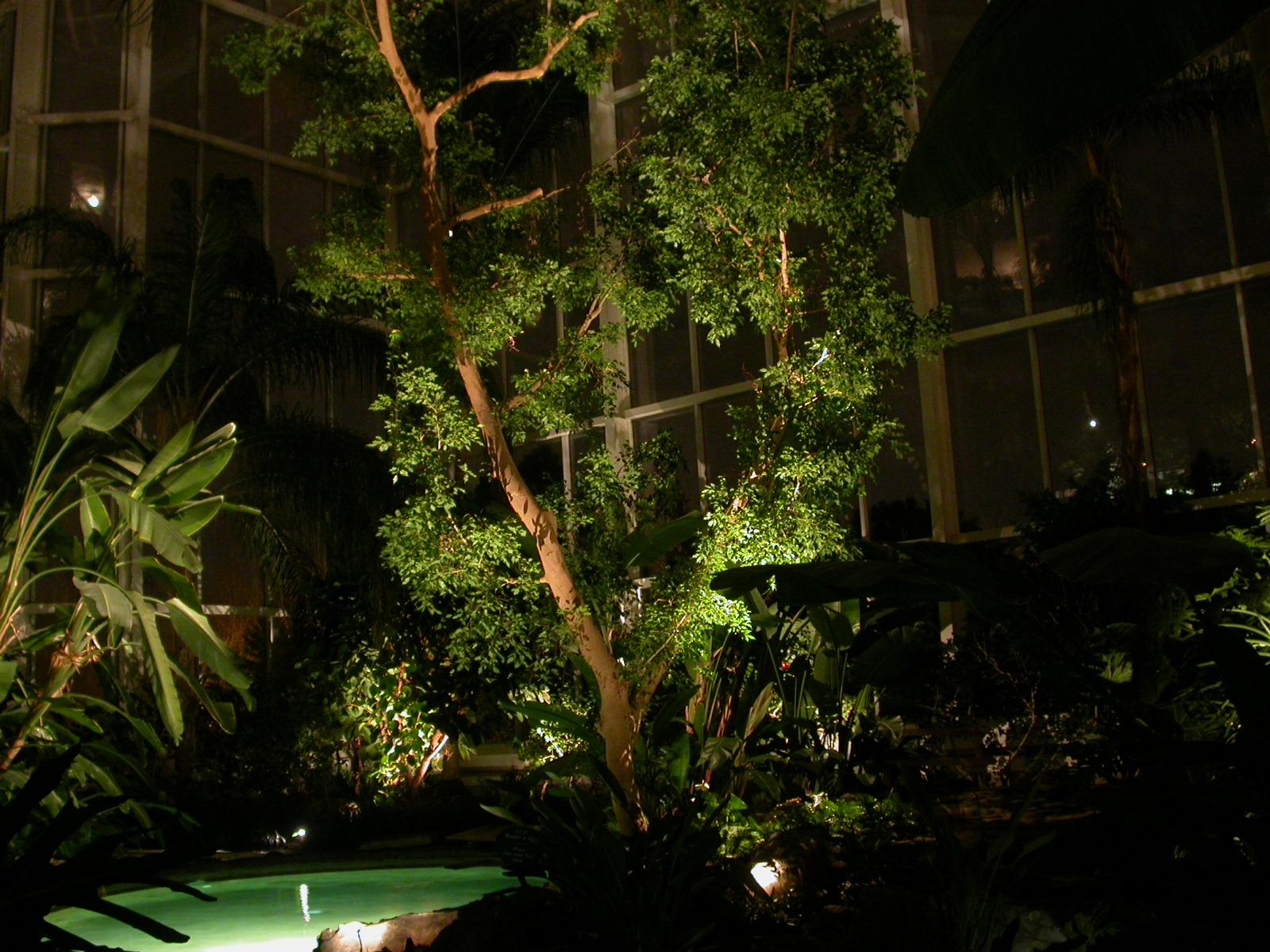Lumière Tropical