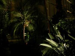 Antille en lumière