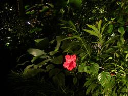 Éclairage Antille