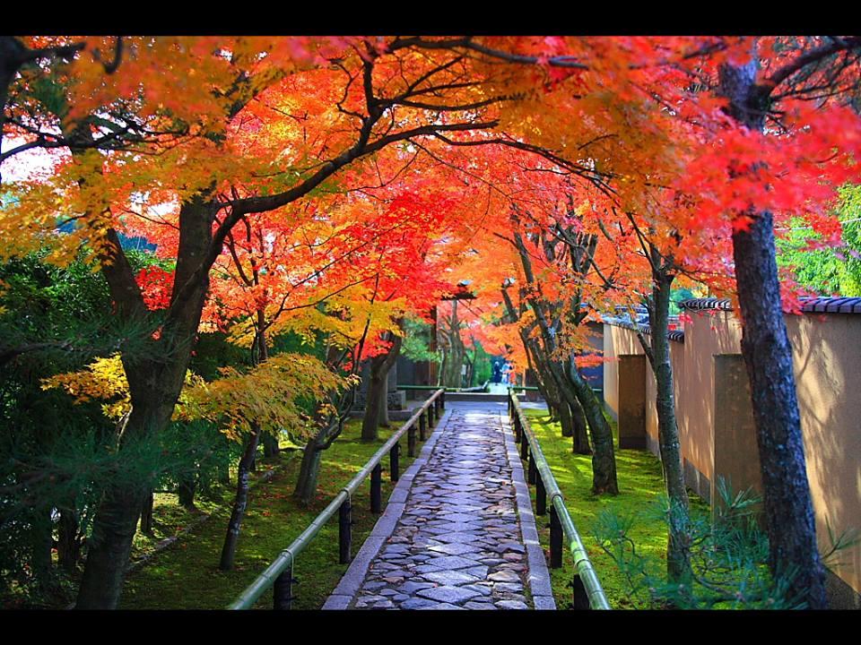 11月 紅葉の光悦寺