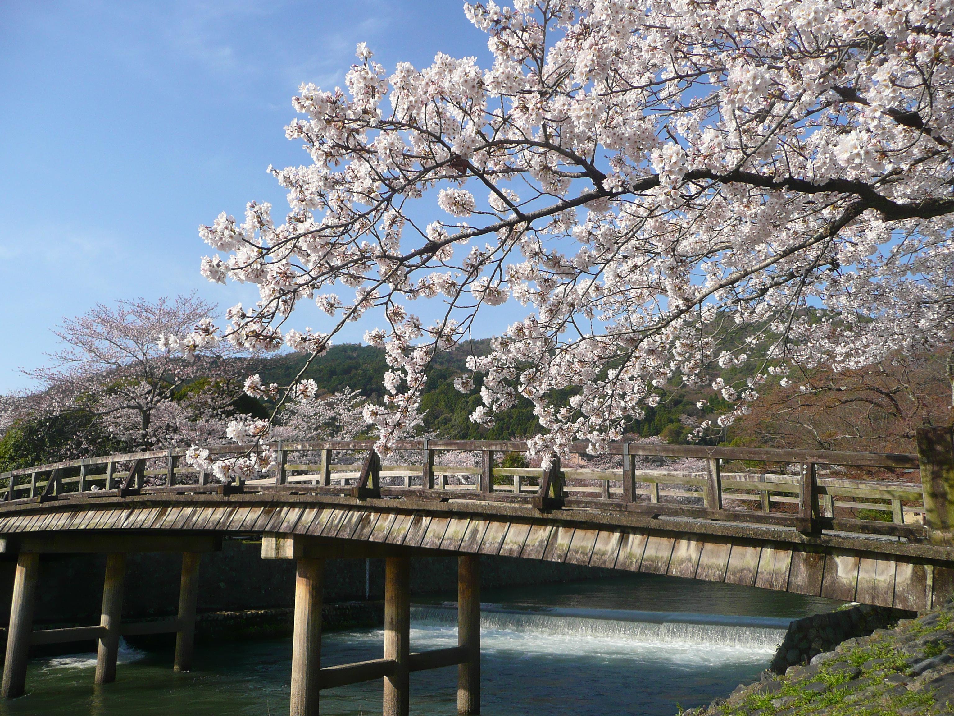 4月 桜の嵐山