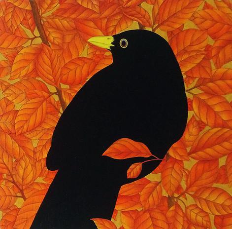 Cotoneaster Blackbird II