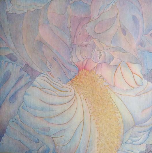 Iridaceae I