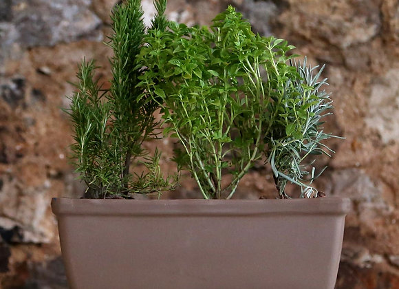 Rosemary, Basil and Lavender in Deroma Cass Roma Liscia Pot with Saucer