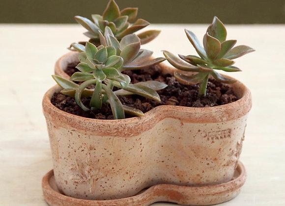 Succulents in Deroma Trio Aromatos and Sottovas