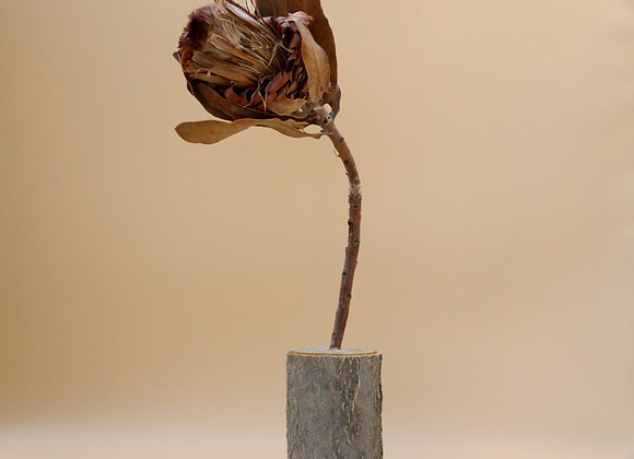 Dried Protea in Wooden Stand
