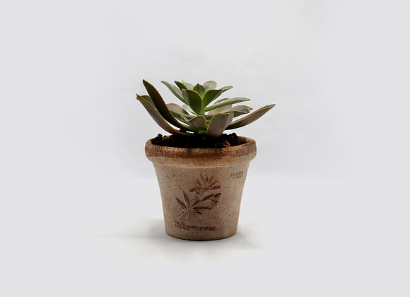 Deroma Terracotta Pot with Succulent