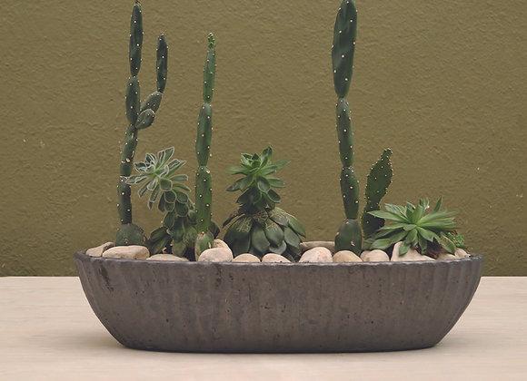 Cactus and Succulent Arrangment in D&M Boat Ellipse Pot