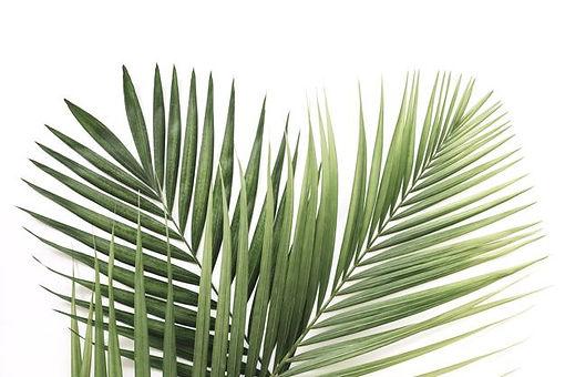 palm 2.jpg