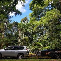 Omaroo - Rainforest in Australia