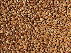 Mid Grain.jpg