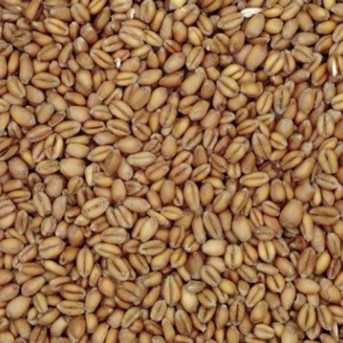 Wheat - base malt