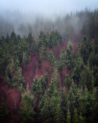 Abergynolwyn-Nant-Gwernol-Misty-Forest.j