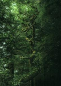 Hafod-Estate-Beautiful-Tree.jpg