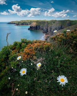 Skrinkle-Haven-Wildflowers-Pembrokeshire