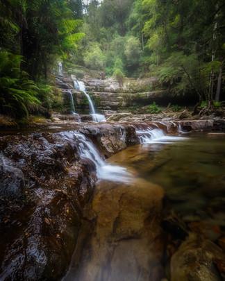 Liffey-Falls-eucalyptus-forest-Tasmania.
