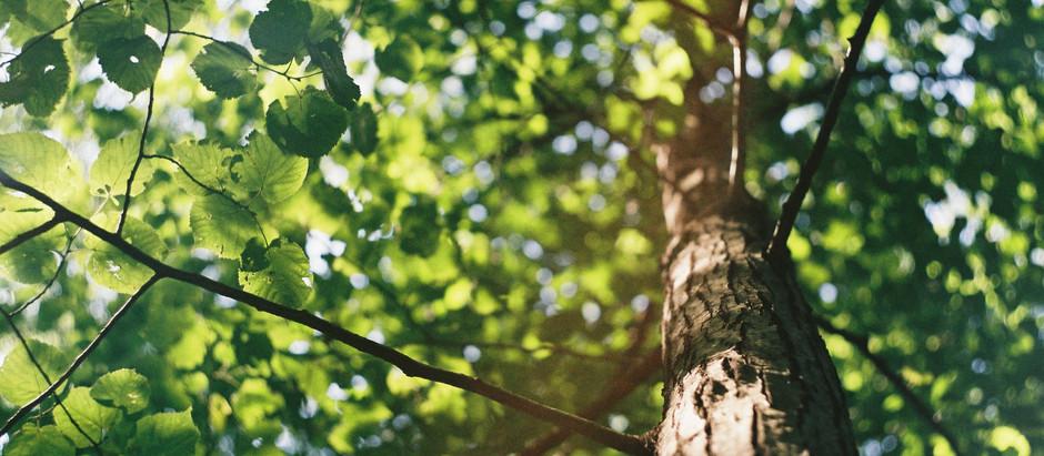 Árbol roto