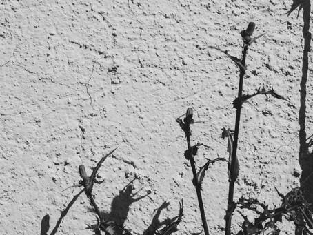 Poemas seleccionados del poemario inédito Suena en una lágrima todo