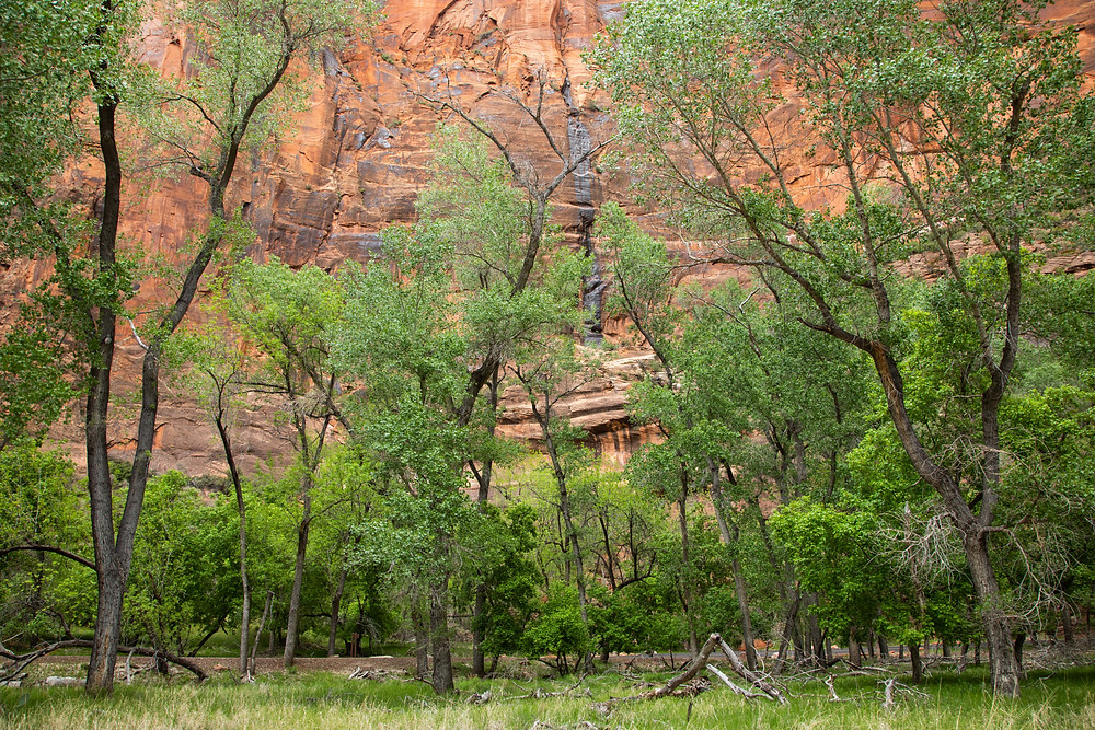 Near Temple of Sinawava shuttle stop in Zion National Park
