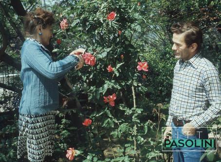 """Pier Paolo Pasolini """"Sospiro di mia madre su una rosa"""" (1953)"""