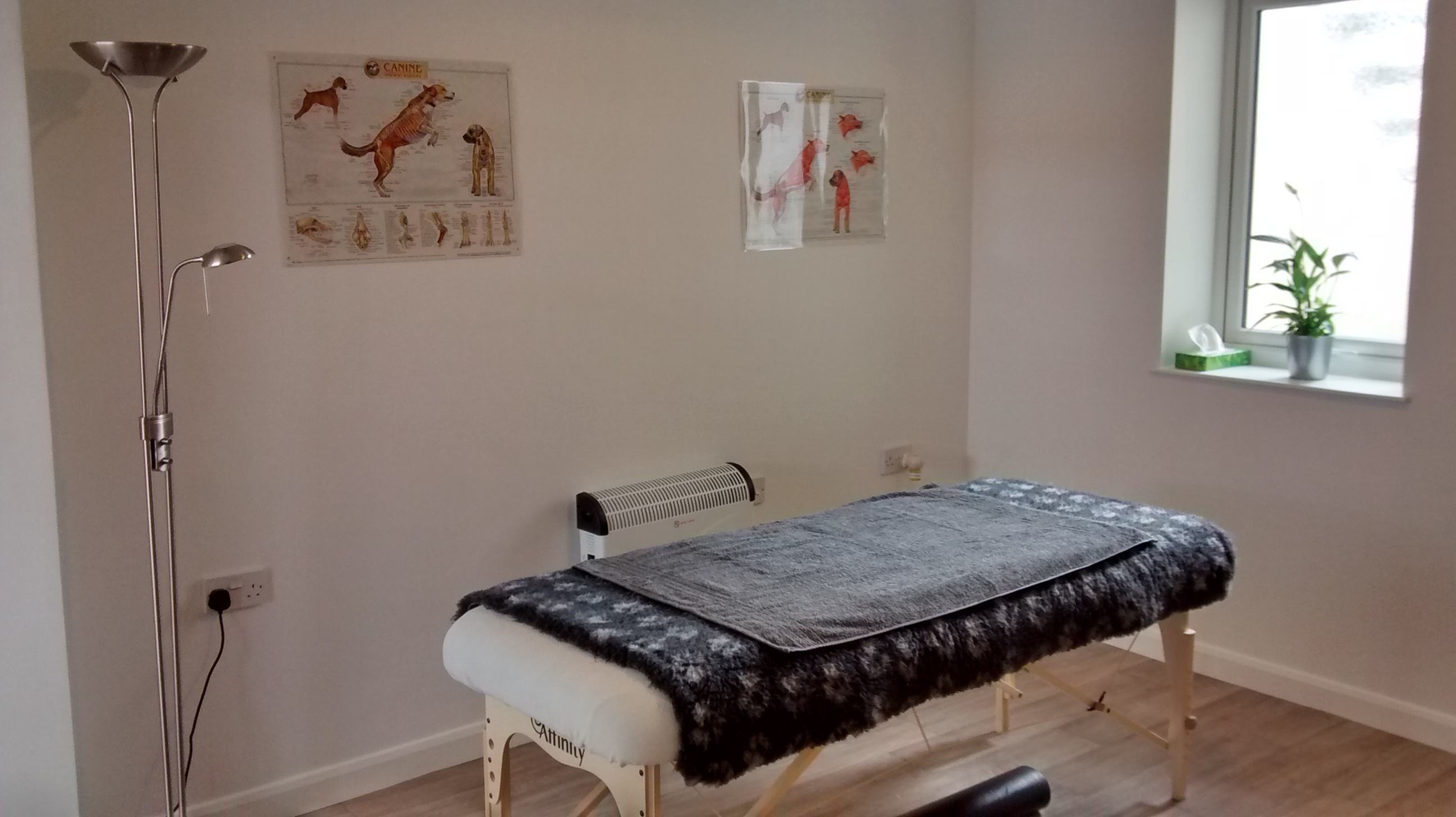 Bounce Back Canine Massage Therapy