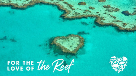 For the Love of the Reef video explainer