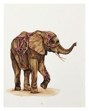 Golden Elephant (9 of 15)