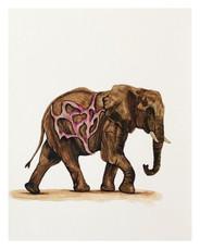 Golden Elephant (15 of 15)