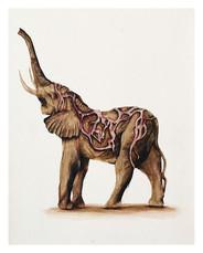 Golden Elephant (1 of 15)