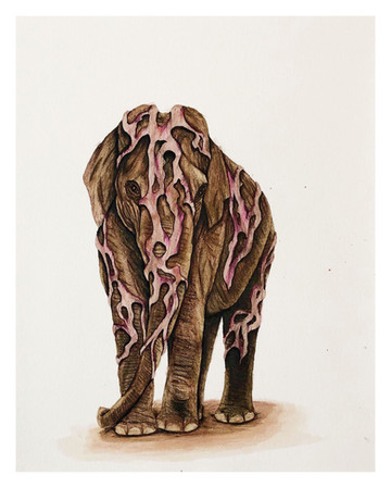 Golden Elephant (2 of 15)