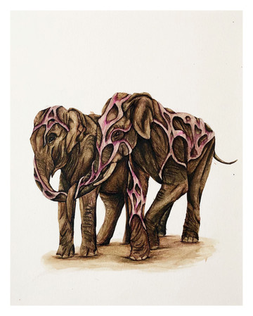 Golden Elephant (4 of 15)