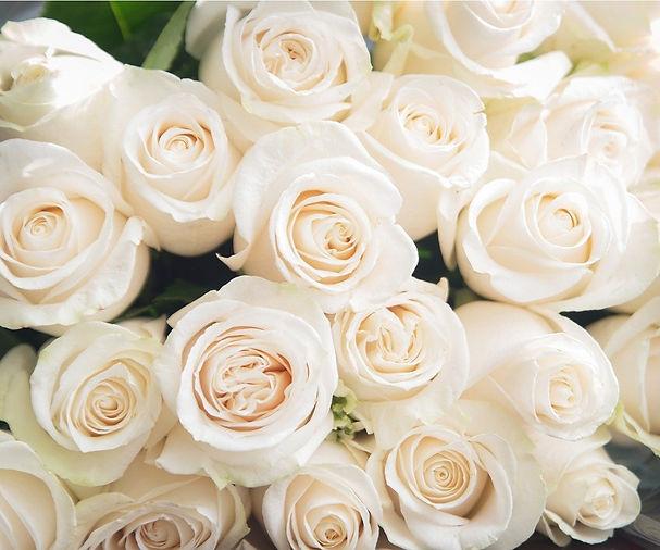 white-roses-background-nature-flowers-bo