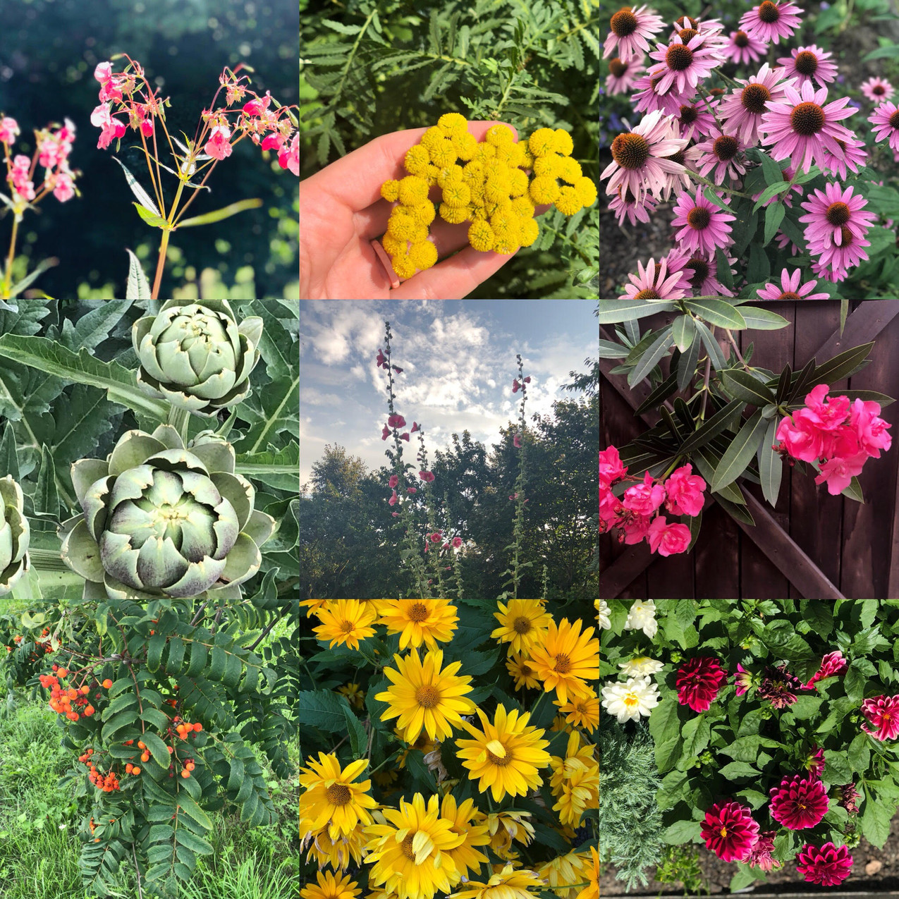 flowers of poland