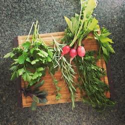 Breakfast essentials #thismorningsharvest #keepgrowing