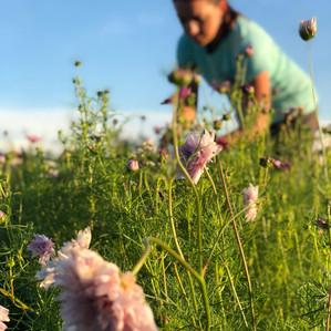 Finding Farmland in the Chesapeake Region