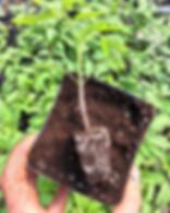 Plant starts southern maryland