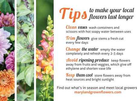 How To Keep Your Flower Fresh