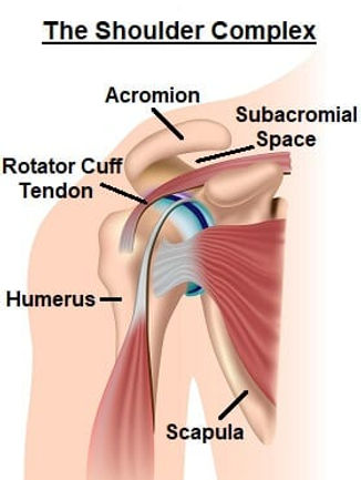 shoulder-complex-anterior.jpg