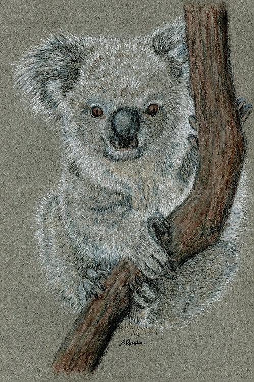 Koala 1 Original