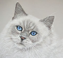 Fluffy Cat WM.jpg