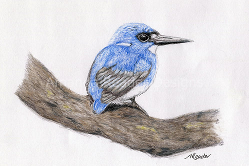 Blue Kingfisher Original