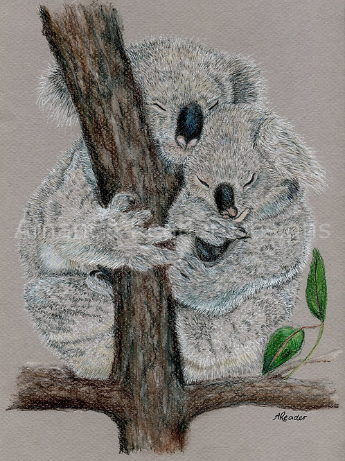 Koala 2 Print