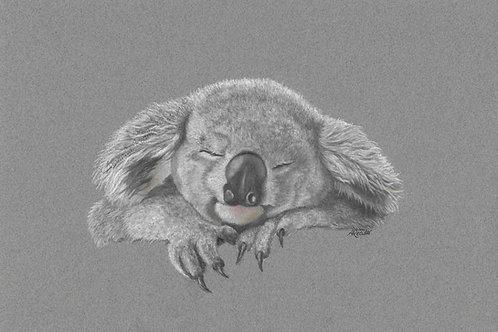 Koala Sleeping Original
