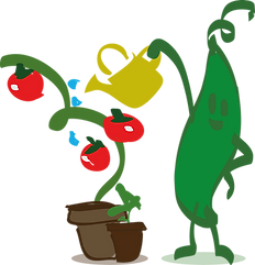 haricot-tomate.png